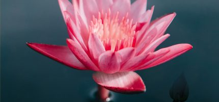 生態復育,瑪倉文教基金會利益大眾放生法